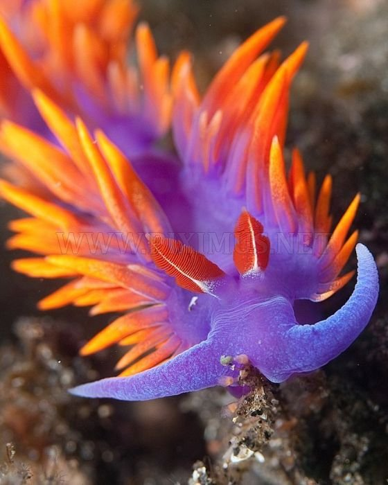 Beautiful Sea Creatures