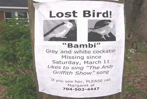 Funniest Lost & Found Pet Signs