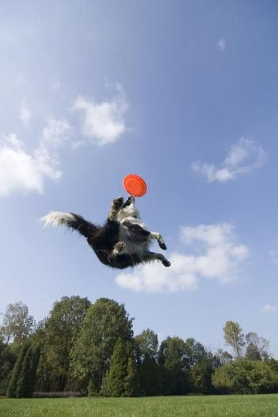 Dogs catching frisbees | Animals