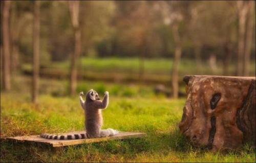 Cute Animals, part 7