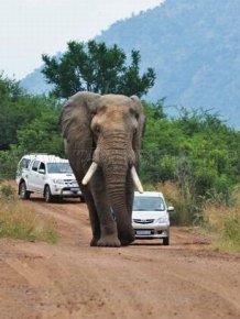 Never Overtake an Elephant