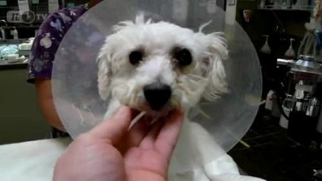 Rescued Puppy Given Second Chance