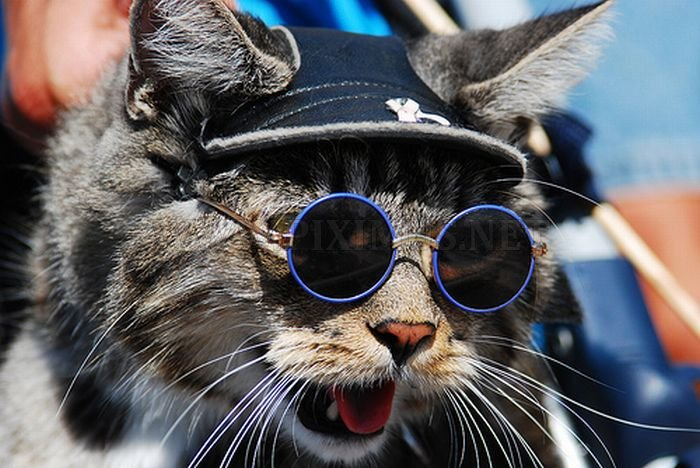 Cats Wearing Glasses
