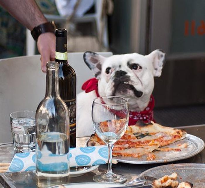 Dogs Eating Pizza