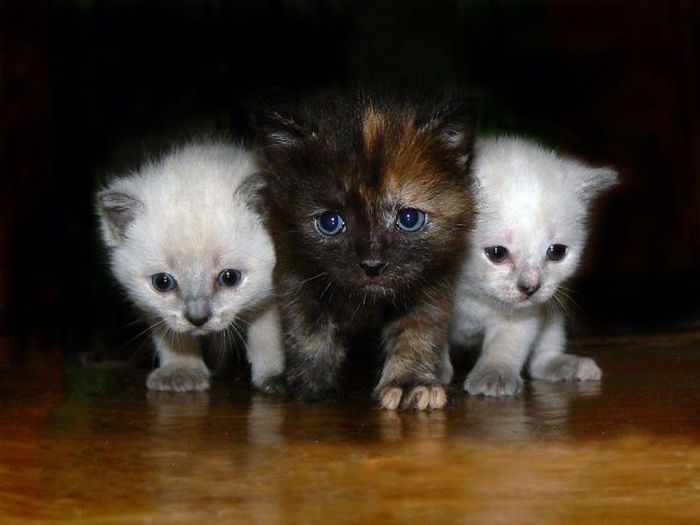 Adorable Kittens