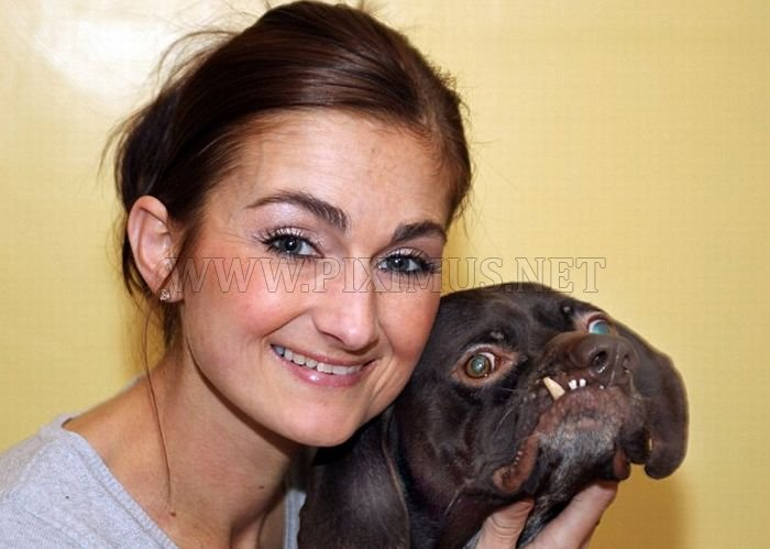 Britains uglies dog found new home