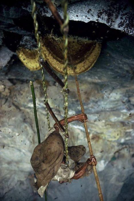 Wild Honey Collectors of Nepal
