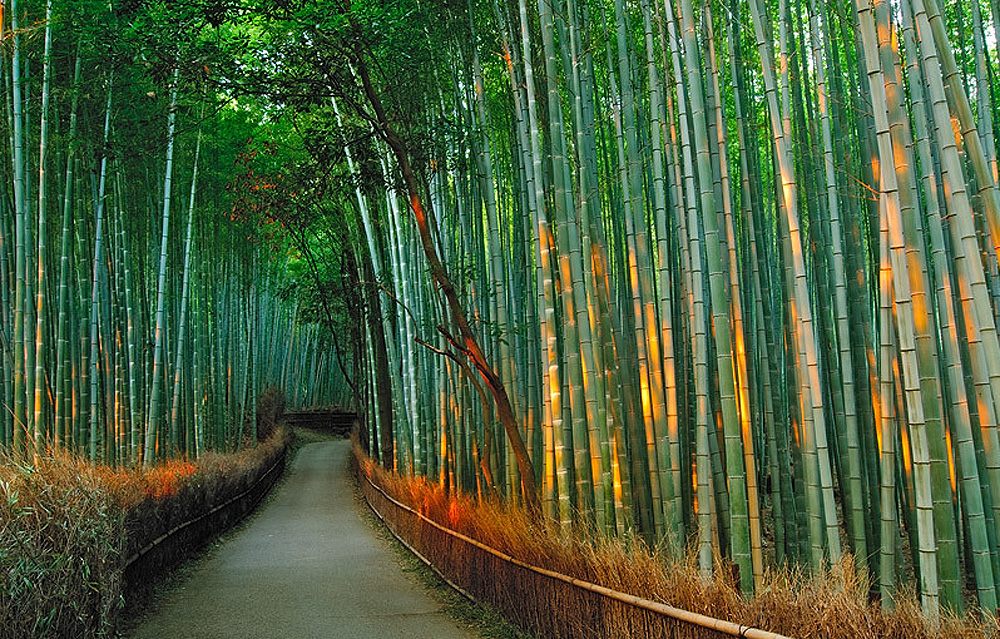Bamboo corridor in the mountain Kyoto