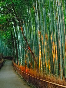 Bamboo corridor in the mountain Kyoto