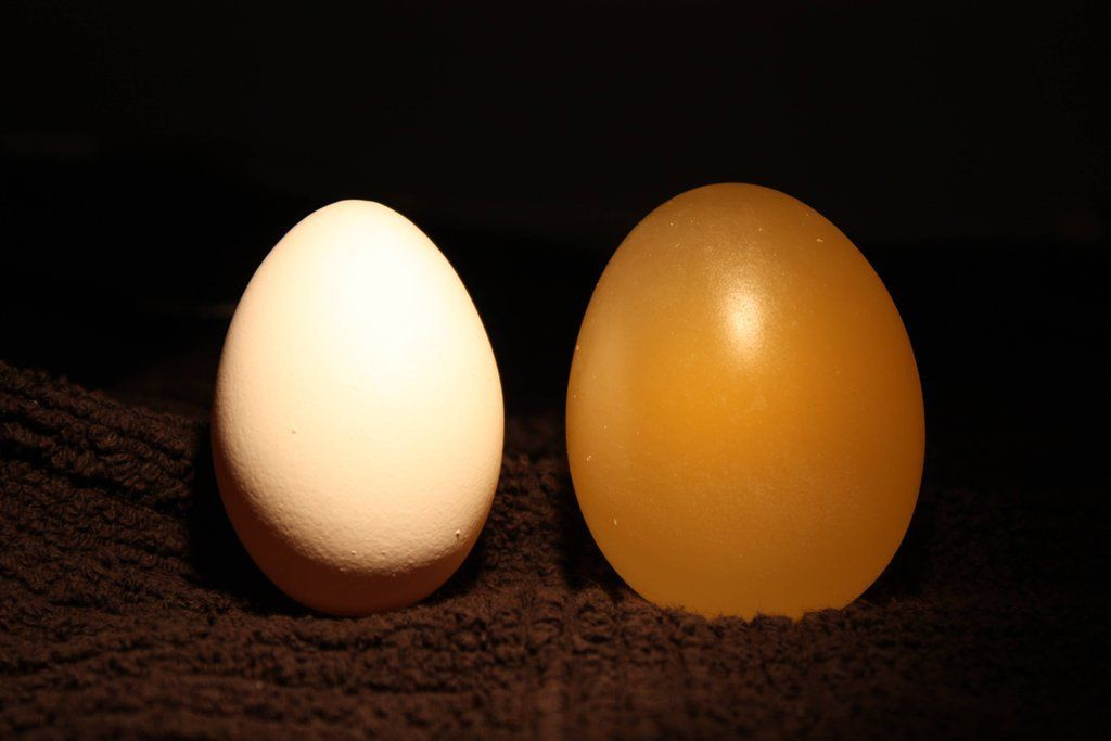 What Happens to an Egg Submerged in Vinegar