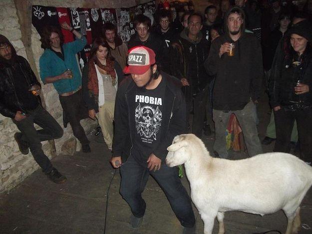Goat Jamming to Punk Rock