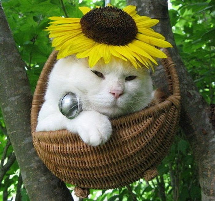 The Most Relaxed Cat in the World Showing Spring Trends