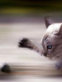 Perfectly Timed Animal Pictures