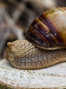 How snails do it