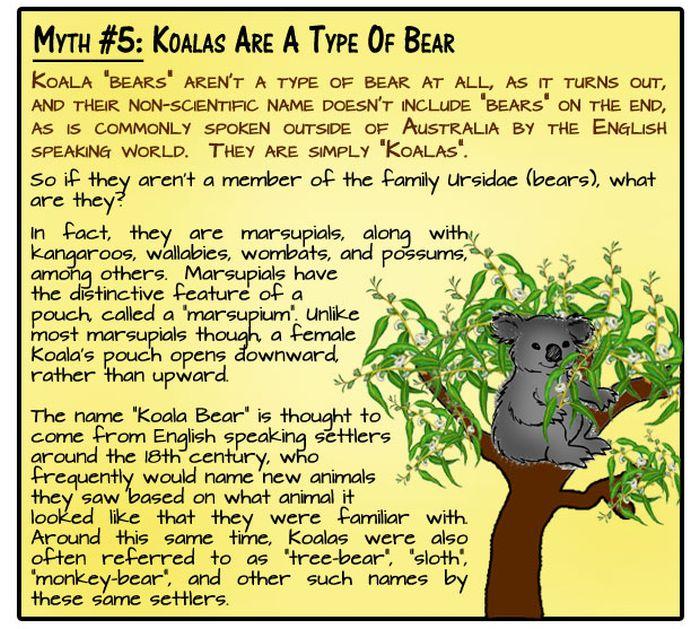 Animal Myths Dispelled