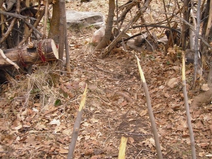 Two Idiots Arrested For Putting Traps In Provo Canyon Park