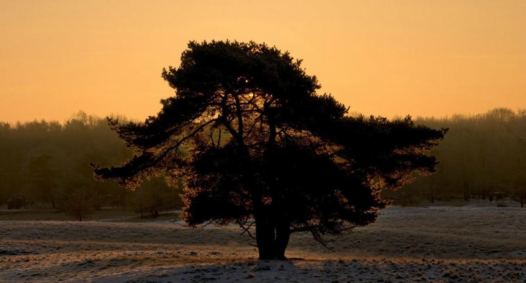 Single trees