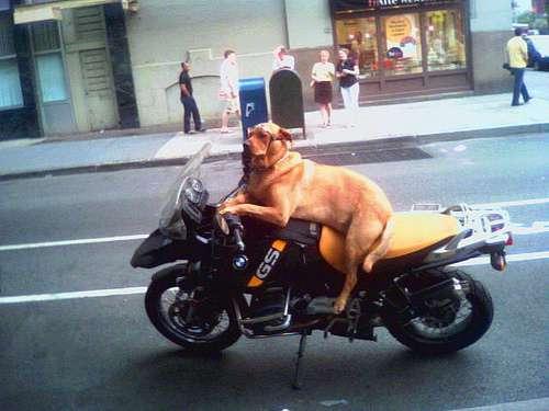 Pets love bikes
