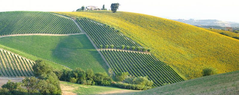 Most beautiful vineyards of the World