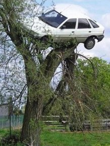 Car on the Top of a Tree