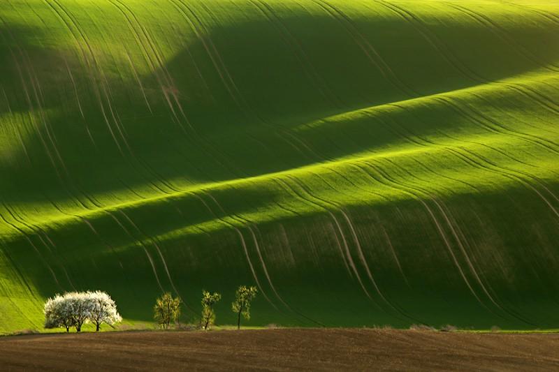 Green fields of Moravia