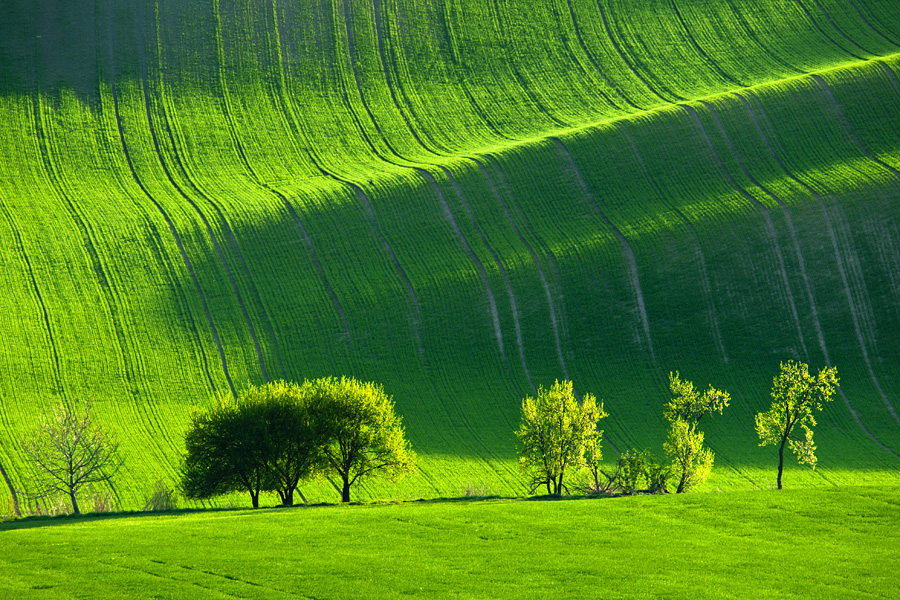 Green fields of Moravia