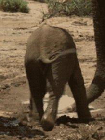 Baby Elephant Fail