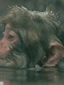 Monkey Wash