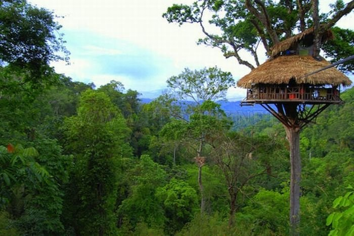 The Most Dangerous Treehouses