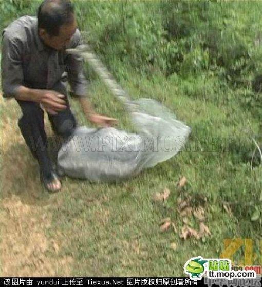 Snake Catcher vs Snake
