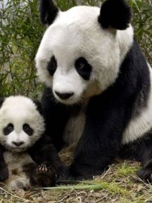 Adorable Animal Mom and Baby Photos
