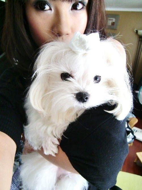 Oscar - cute Maltese puppy