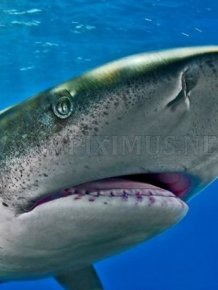Photos of Sharks