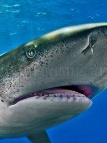 Photos of Sharks