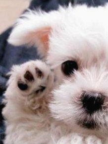 Tiny Cute Animals
