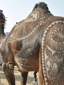 Amazing Camel Hair Art