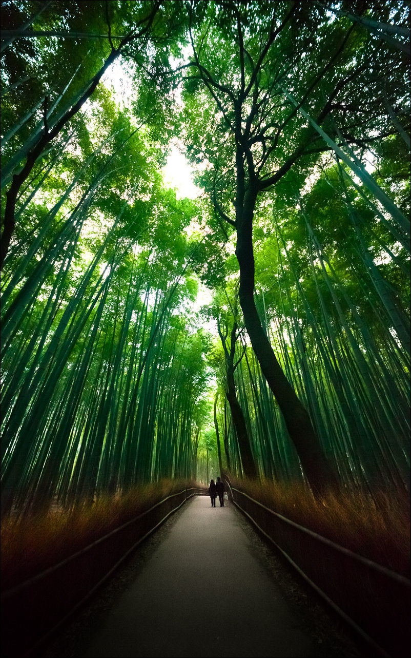 Fantastic Bamboo Grove in Japan