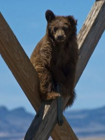 A Bear Way Up There