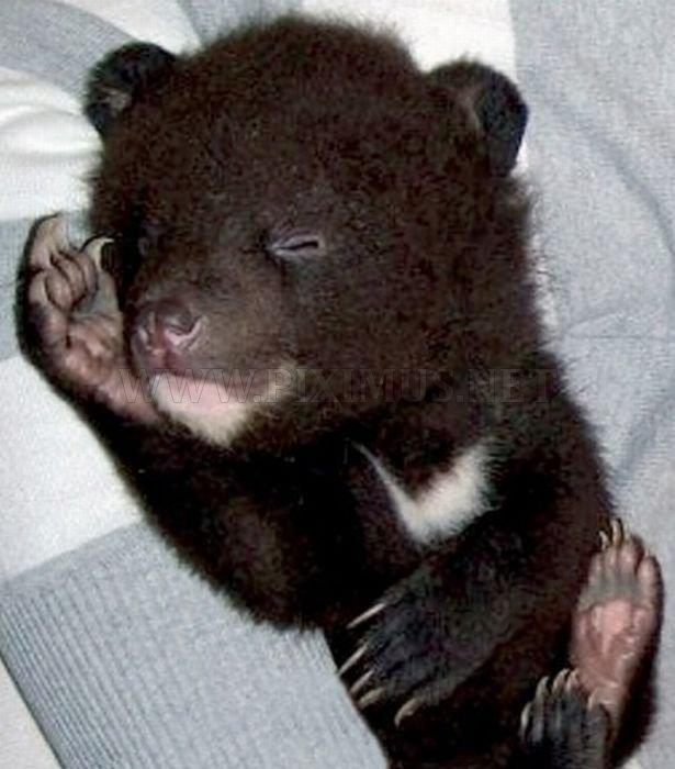 Himalayan Bear Cubs Found New Home