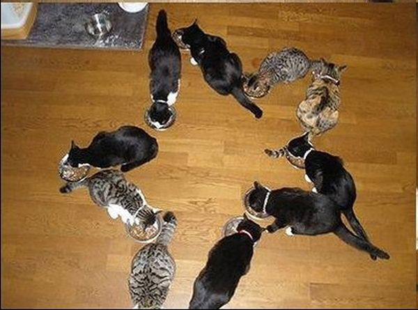 How to Have Fun with Cats