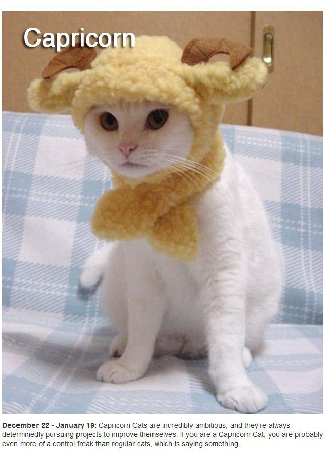 Zodiac Cats