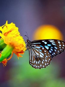 Close-up Photos of Colorful Butterflies