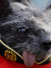 The World's Ugliest Dog 2012