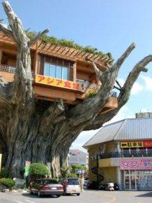 Okinawa's Banyan Treehouse Restaurant