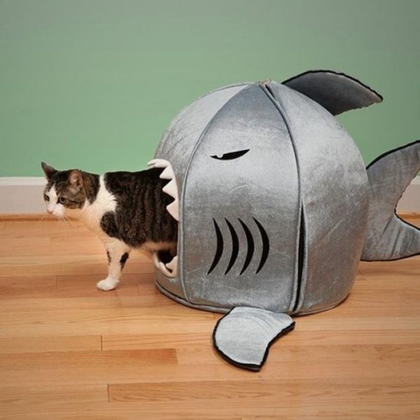 Furniture for Cats