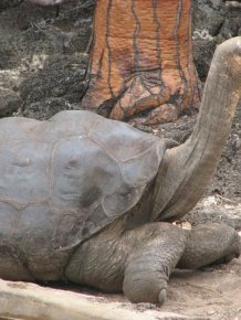 Animals That Are Recently Extinct