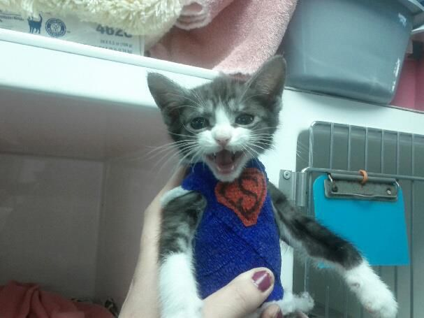 Superkitten Saved by Vets