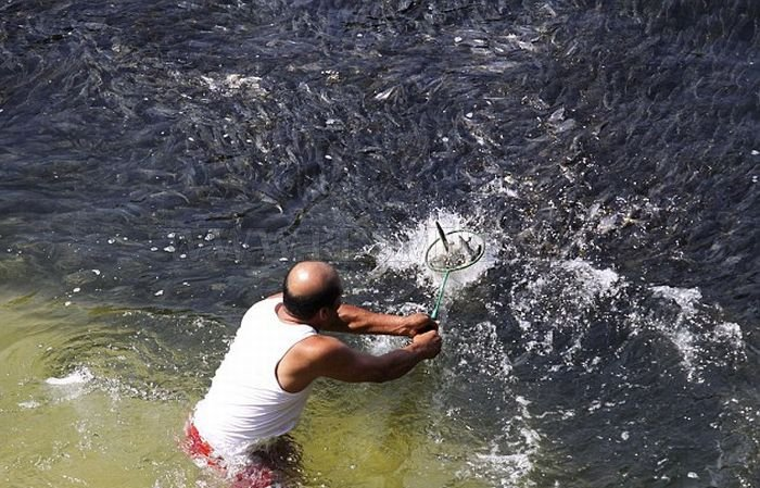 Large Swarms of Fish along the Coast of Acapulco
