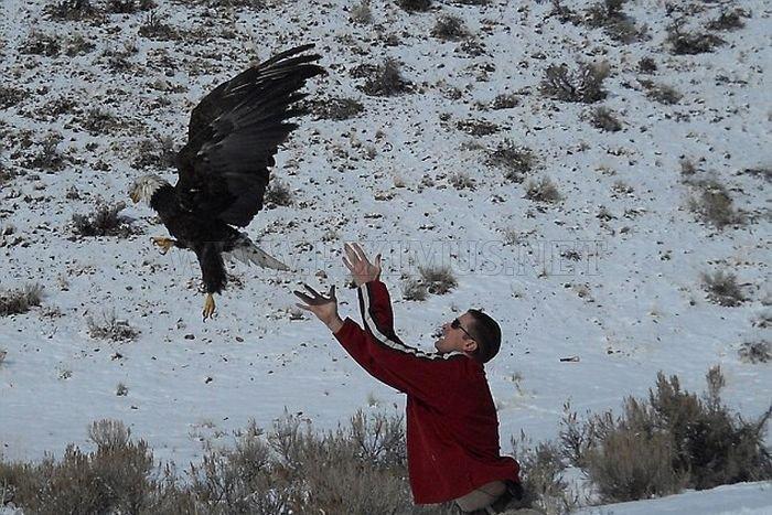 Eagle Has Landed on Windscreen