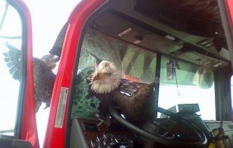 Eagle Has Landed on Windscreen